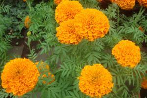 Casa Azul Tropical Garden Bronx Horticultural Garden June 2015-10