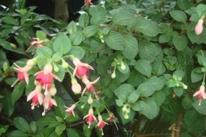 Casa Azul Tropical Garden Bronx Horticultural Garden June 2015-19