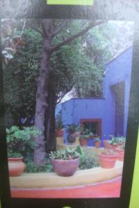 Casa Azul Tropical Garden Bronx Horticultural Garden June 2015-29