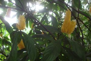Casa Azul Tropical Garden Bronx Horticultural Garden June 2015-36