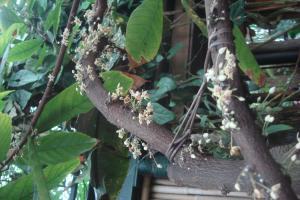 Casa Azul Tropical Garden Bronx Horticultural Garden June 2015-40
