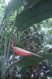 Casa Azul Tropical Garden Bronx Horticultural Garden June 2015-42