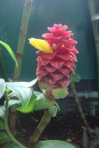 Casa Azul Tropical Garden Bronx Horticultural Garden June 2015-47
