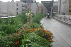 The High Line, New York, June 2015-25