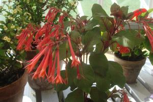 Annuals mid-Atlantic 2015-09