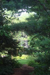 Joy in the Woods 22015-04