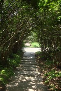 Joy in the Woods 22015-12