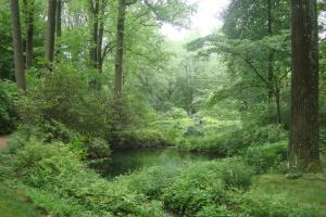Joy in the Woods 22015-13
