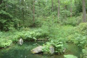 Joy in the Woods 22015-14