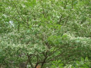 Tree Green, Winterthur, 2012,13-05