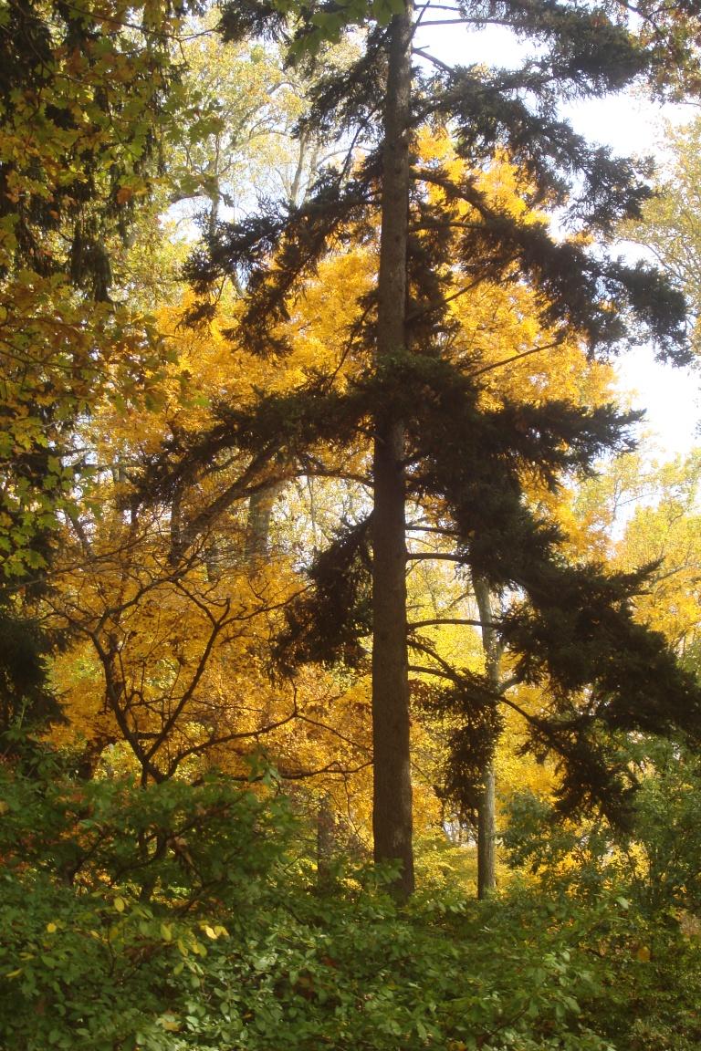 Autumn 2015-28