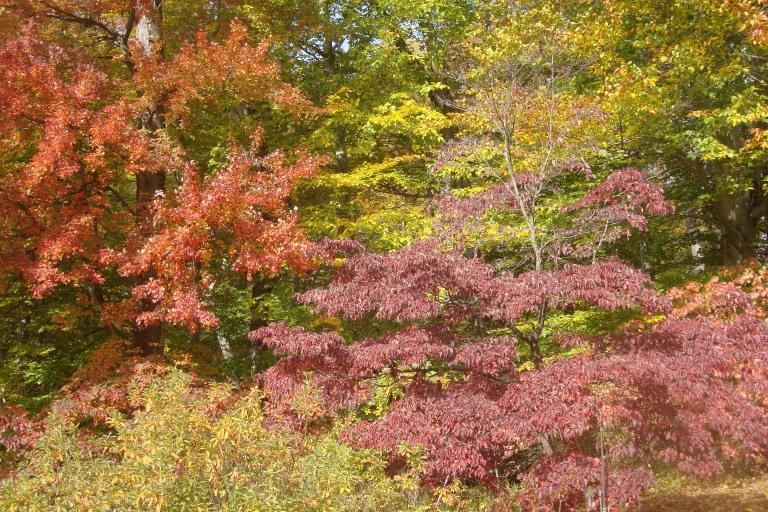 Autumn 2015-30