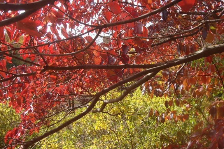 Autumn 2015-31