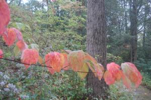 Early autumn, Mt. Cuba, October 1, 2015-08