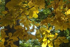 Mid-Autumn 2015 Winterthur Oct 22 2015-03