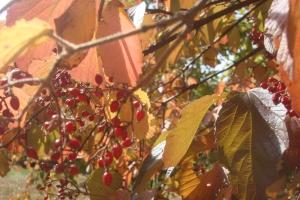Mid-Autumn 2015 Winterthur Oct 22 2015-12