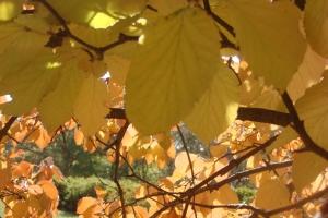 Mid-Autumn 2015 Winterthur Oct 22 2015-14