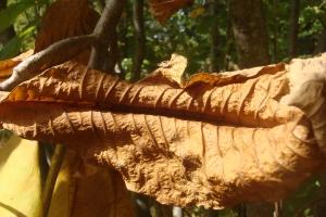 Mid-Autumn 2015 Winterthur Oct 22 2015-15