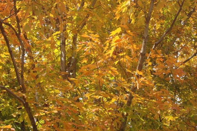 Mid-Autumn 2015 Winterthur Oct 22 2015-21