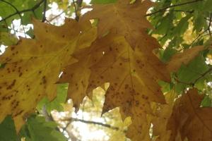 Mid-Autumn 2015 Winterthur Oct 22 2015-23