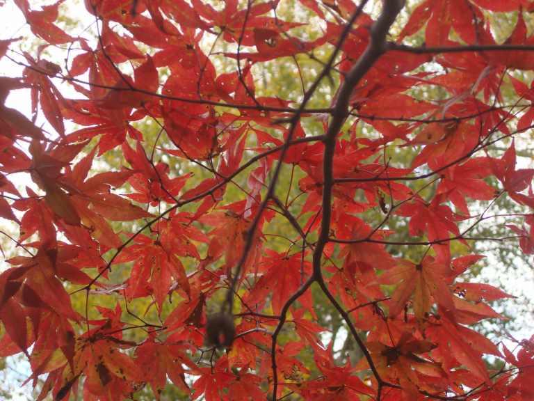 Winterthur Autumn 2013-17