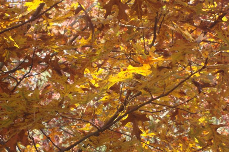 Autumn colour blocks October 2015-03