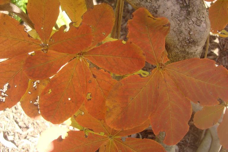 Autumn colour blocks October 2015-25