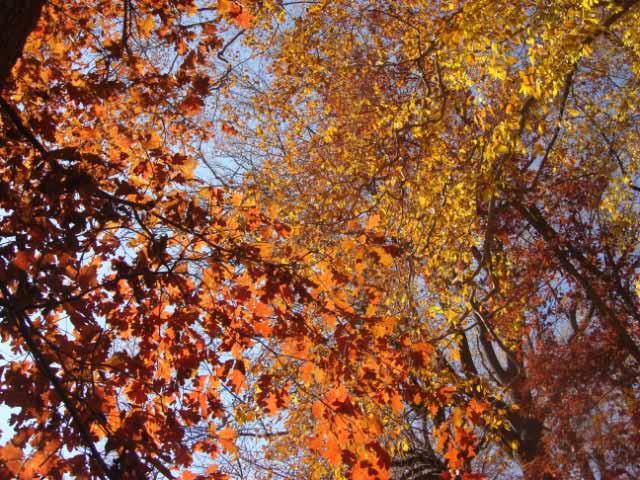 Winterthur Autumn 2013-26