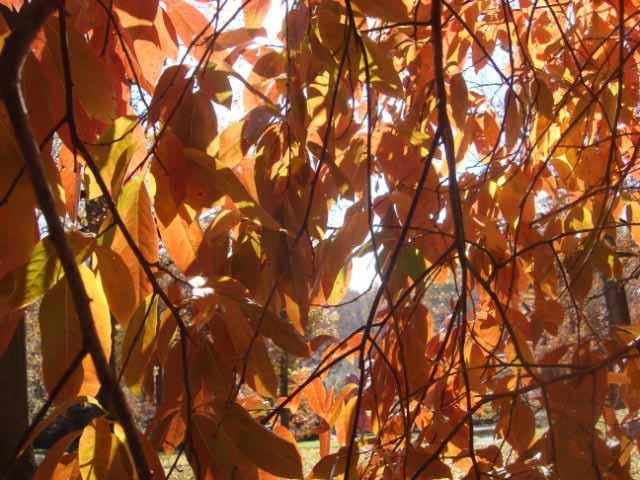 Winterthur Autumn 2013-29