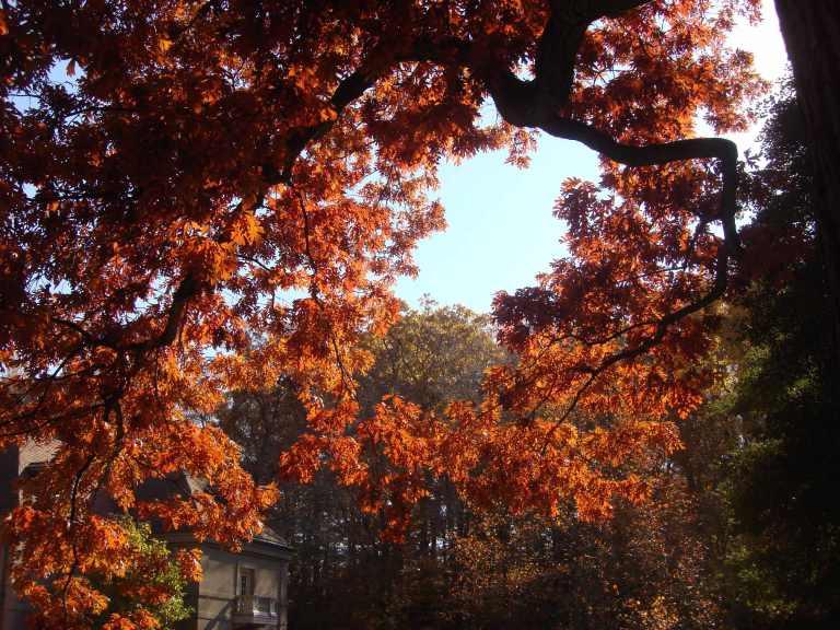 Winterthur Autumn 2013-30