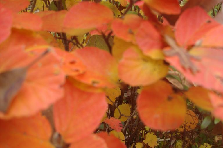 Autumn colour blocks October 2015-16