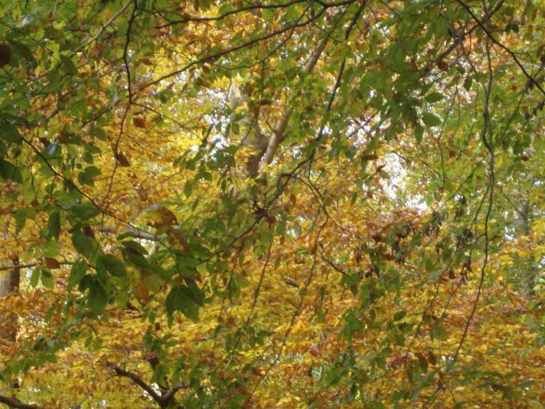winterthur-autumn-2013-21-1