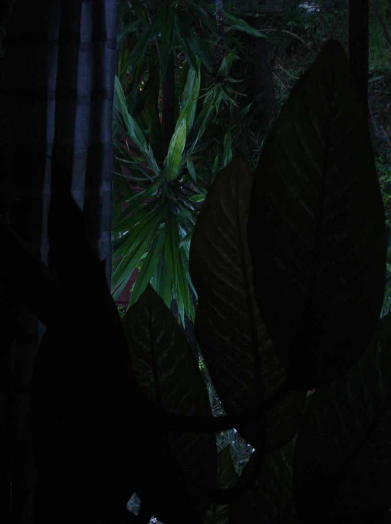 addis-ababa-gardens-2014-3-10