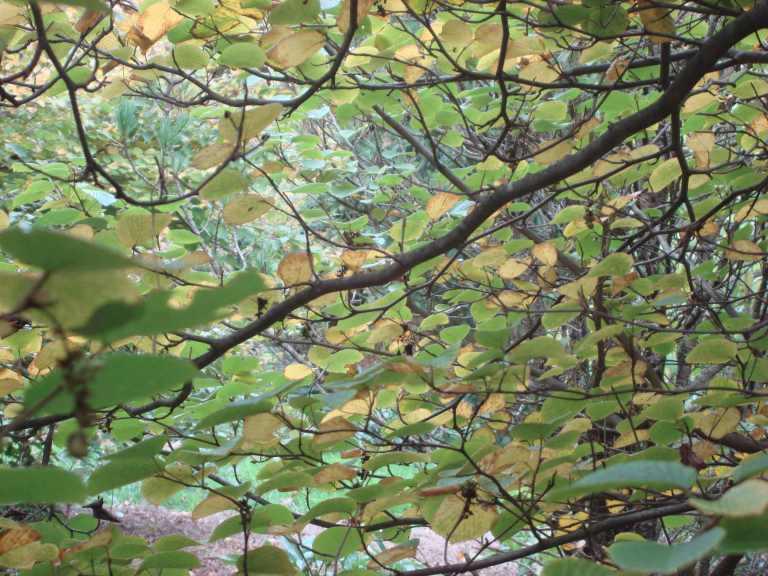 Winterthur Autumn 2013-09